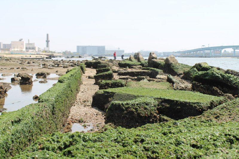県立甲子園浜海浜公園(鳴尾エリア)
