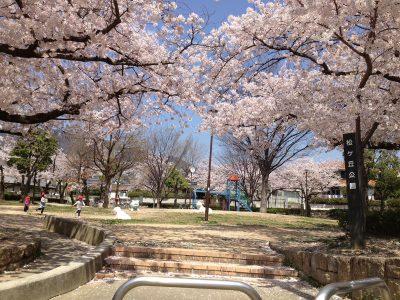 松ケ丘公園