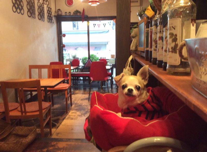 リビングカフェの看板犬 武蔵くん